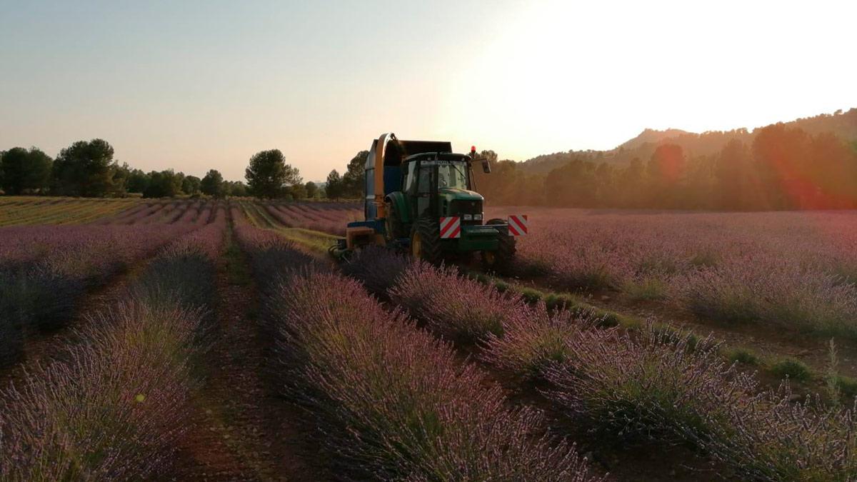 tractor2-alcarria-flora